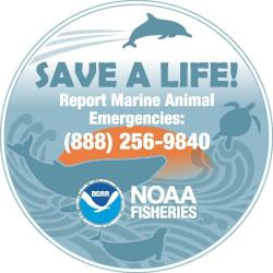 Report marine animal emergencies decal.