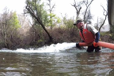 Juvenile chinook salmon are reintroduced to Battle Creek via a large hose.