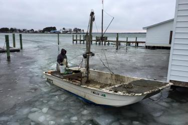 A Madhouse Oysters employee guides a boat through icy waters.