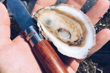 """A hand holding an oyster knife and a freshly shucked """"Salty Bird"""" oyster."""
