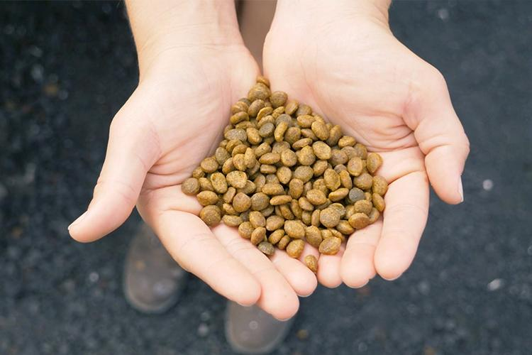 A close-up of fishmeal feed.