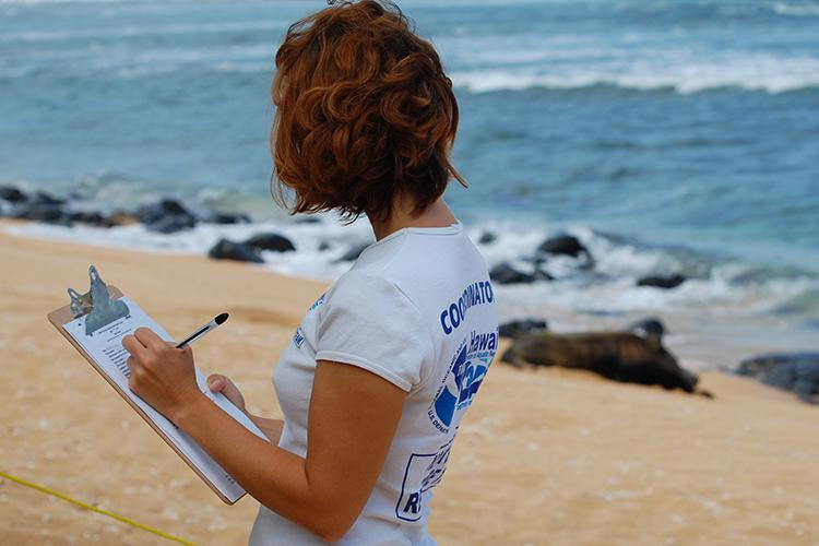 Volunteer taking data on a clipboard on the beach.