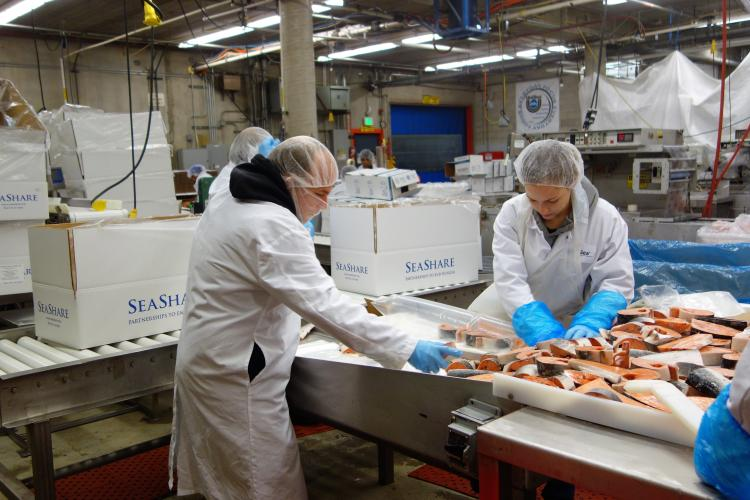 Phtoto of seafood processors cutting salmon into steaks in processing plant.