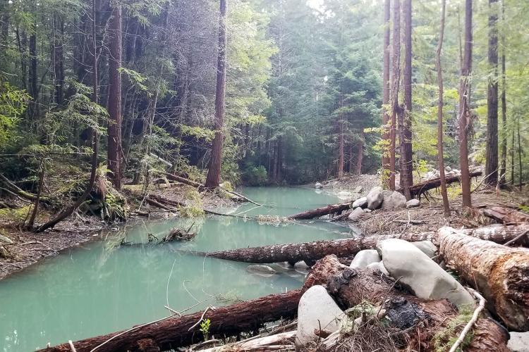 Lawrence Creek