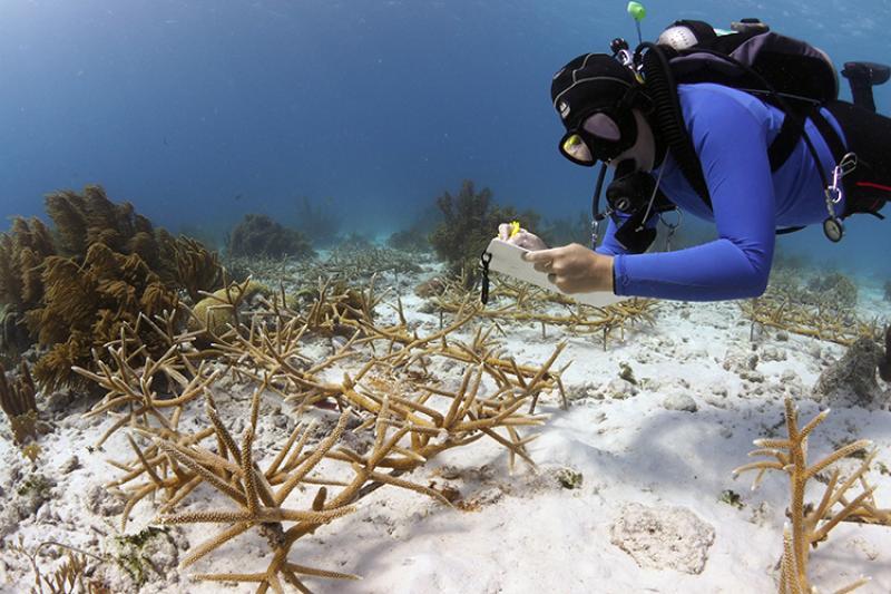 Diver monitoring corals