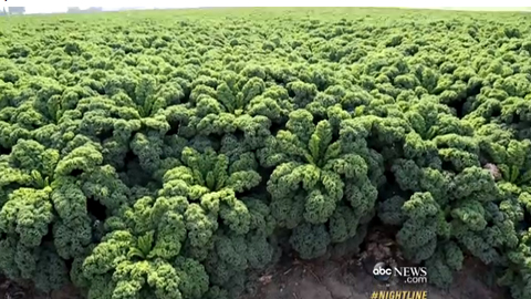 Economy of Kale: Leafy Green Is Taking Over
