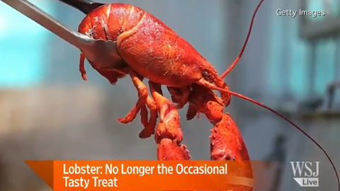 Lobster Shows Up on More Menus