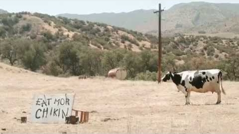 The Cows Behind Chick-fil-A's