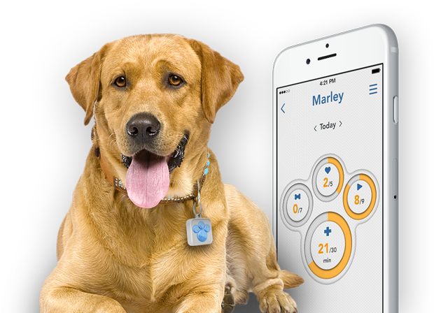 Pet Tag Plus A Pet Company First Making Affordable Fun