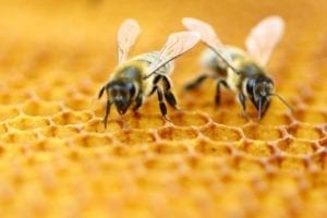 npo funding for City Bees – New Castle