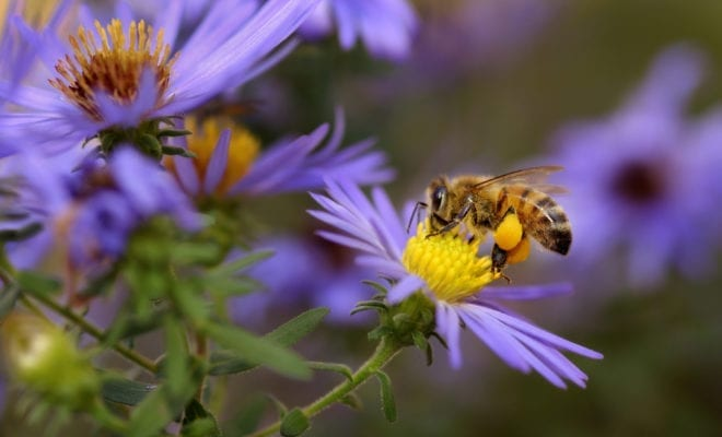 npo funding for City Bees – Durham