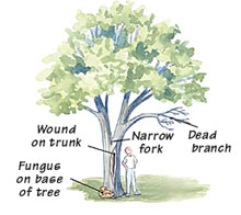 Give your trees a checkup
