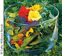 Nasturtiums in salads