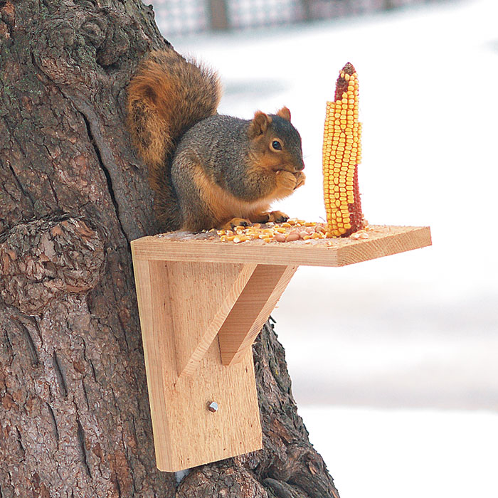 Squirrel proof your birdfeeders garden gate - How do you keep squirrels out of your garden ...