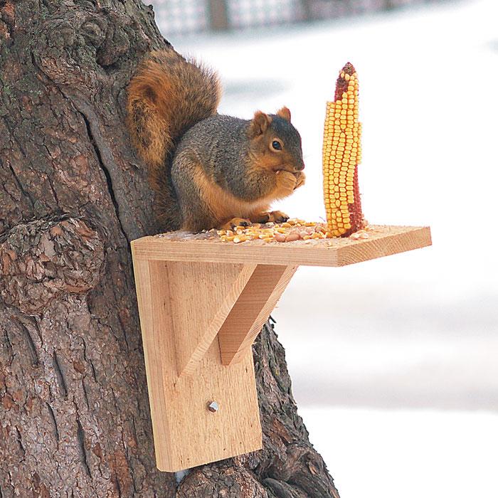Squirrel Proof Your Birdfeeders Garden Gate Enotes