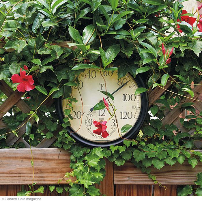 Potted Mandevilla Garden Gate eNotes