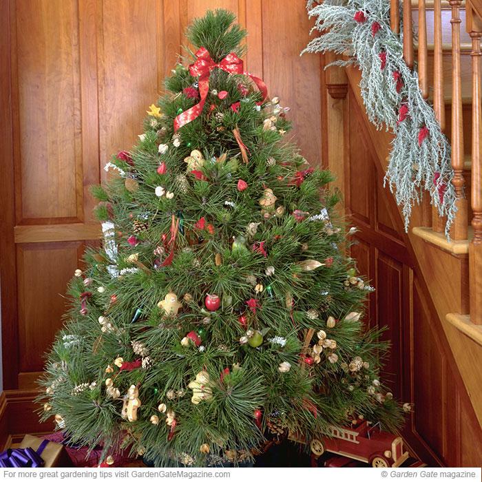 Living Christmas Tree Care Guide