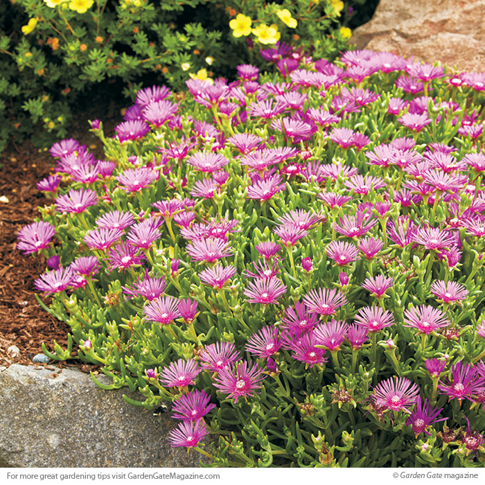 Long blooming perennials garden gate magazine 1 of 4 mightylinksfo