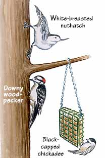 How to Make Your Own Suet