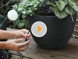 container watering tips