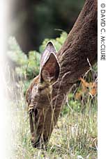 Deer-Control products