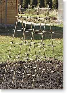 Building a Bamboo Trellis
