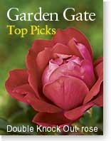 Garden Gate's Top Picks