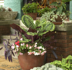 House Plant Combos
