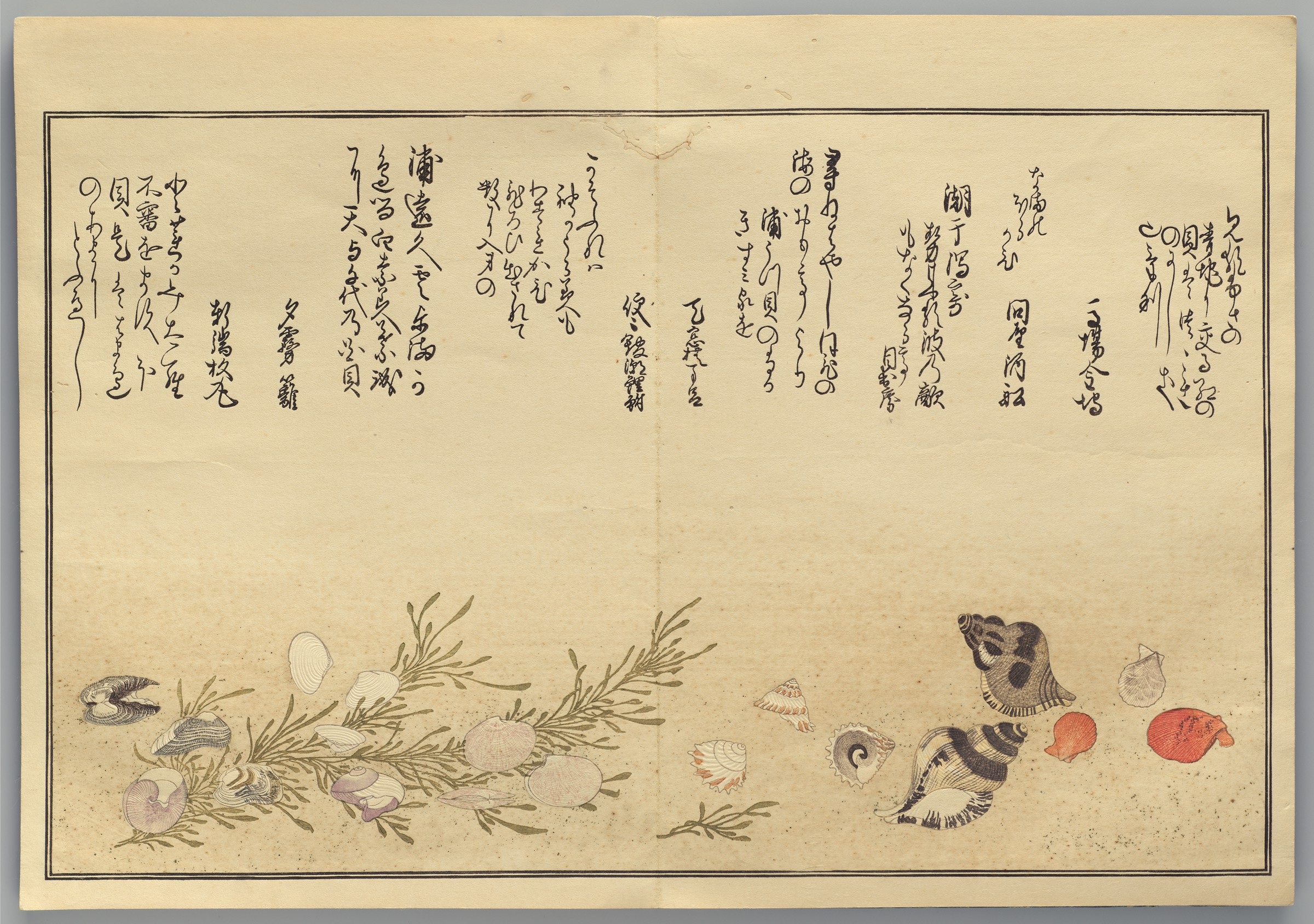 Page from the woodblock-printed book by Kitagawa Utamaro depicting seashells and seaweed.