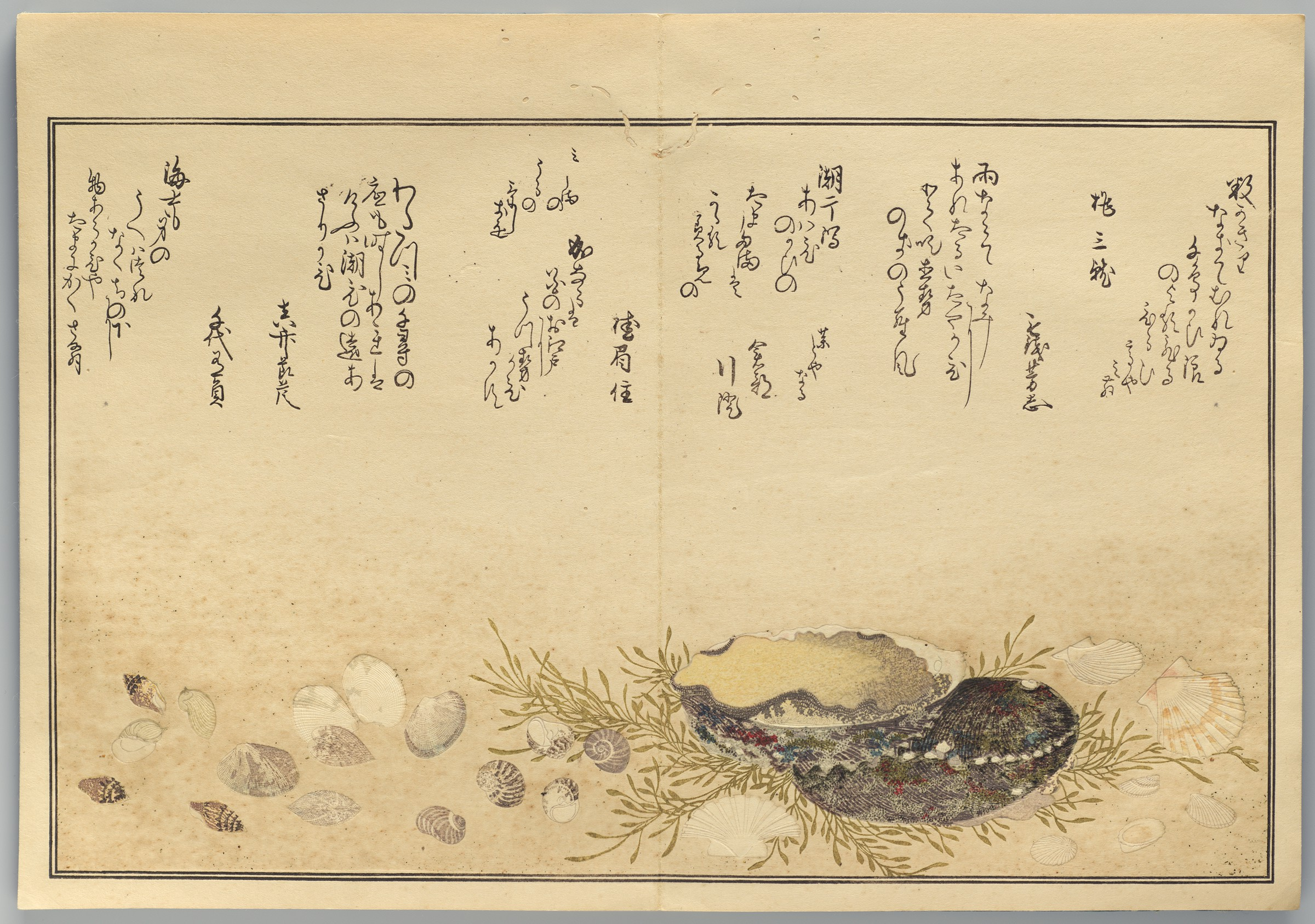 Page from the woodblock-printed book by Kitagawa Utamaro depicting seashells.