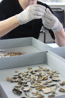 Huntsman spent the morning sorting through the bones and other debris, organizing each type into its own compartment. The complete contents totaled a little over a pound—about a quarter of the typical weight of a cremated individual.