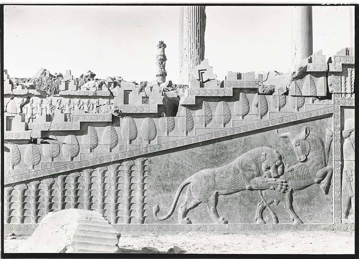 "The central section of the Apadana's eastern staircase facade depicts a lion attacking a bull, as well as plant motifs. Hans-Wichart von Busse, ""Detail of the central section of the Apadana's eastern staircase facade."" Gelatin silver print. Collection of Azita Bina and Elmar W. Seibel, TL41708.4."