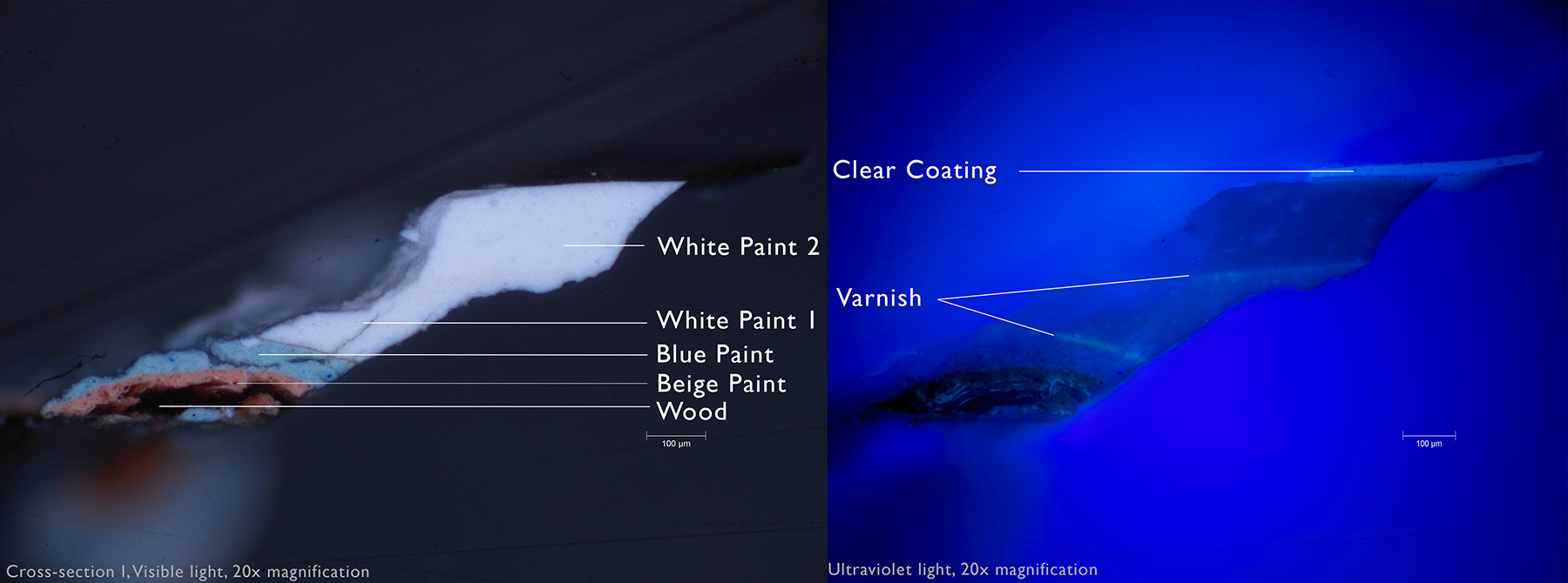 Left: This paint cross-section taken from the edge of Panel A revealed the presence of blue paint underneath two layers of white paint, confirming that Arp's instructions to paint the panels blue were followed. Right: Examination of the cross-section under ultraviolet light revealed the presence of several layers of varnish (which appear as green fluorescent lines) between paint layers.