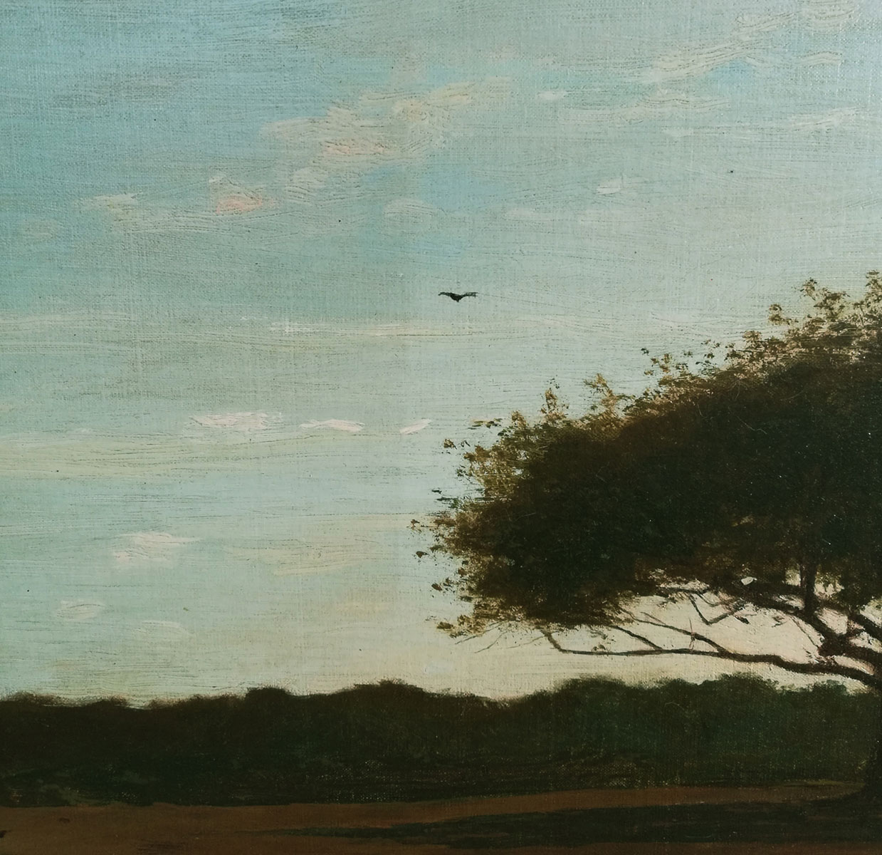 A closer look of a tree and bird in the background with the left side of the image a darker shade (prior to surface cleaning) than the lighter right side (after surface cleaning).