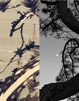 There are two images side by side. The left image is an ink painting. It shows a pine tree with sharp, twisted branches and long delicate needles against a gray background with accents of white. The right image is a black and white photograph of twisting pine branches with long, thin needles, set against a clear night sky.