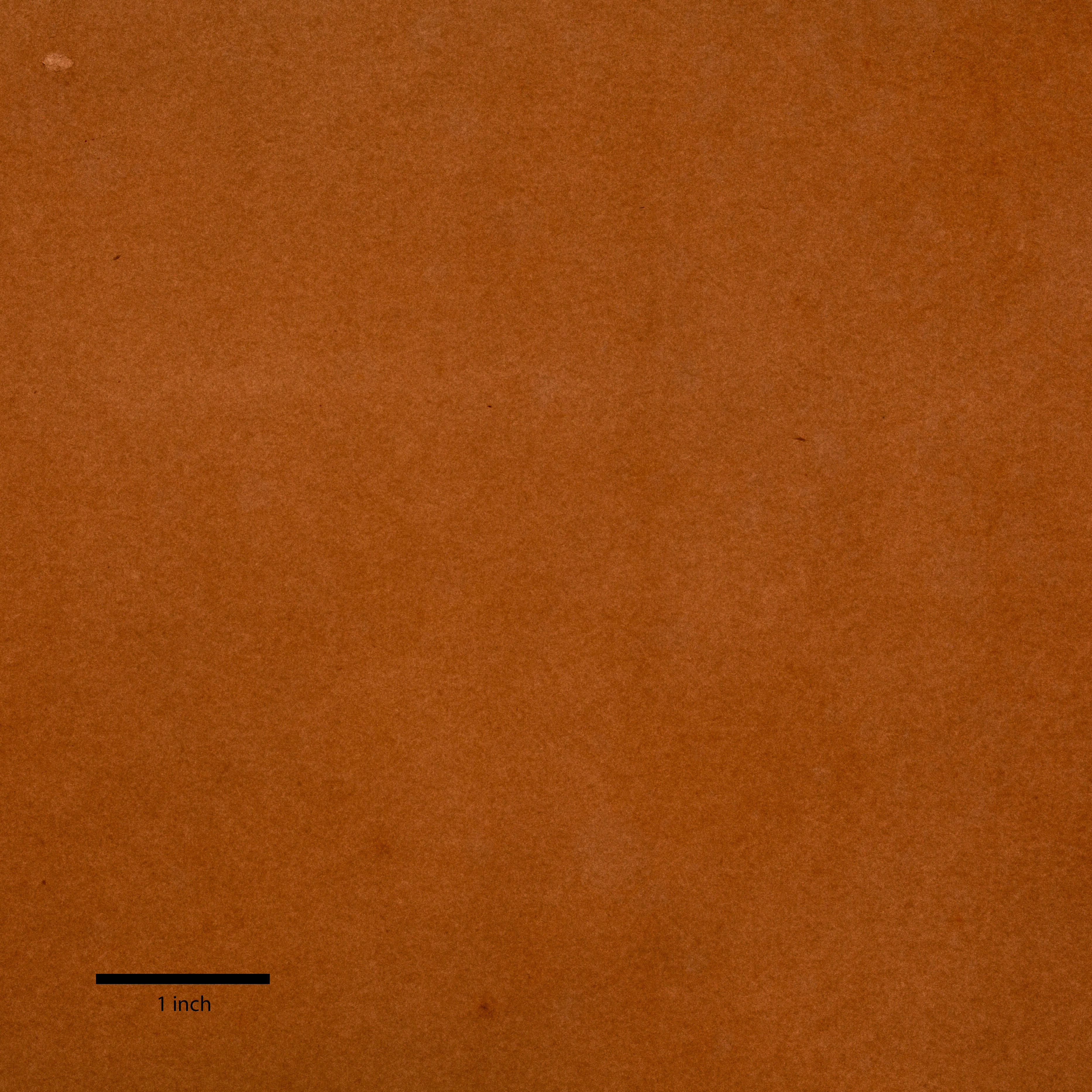 A smooth reddish-brown sheet of paper illuminated from the back. A thick black line marks one inch at bottom left.