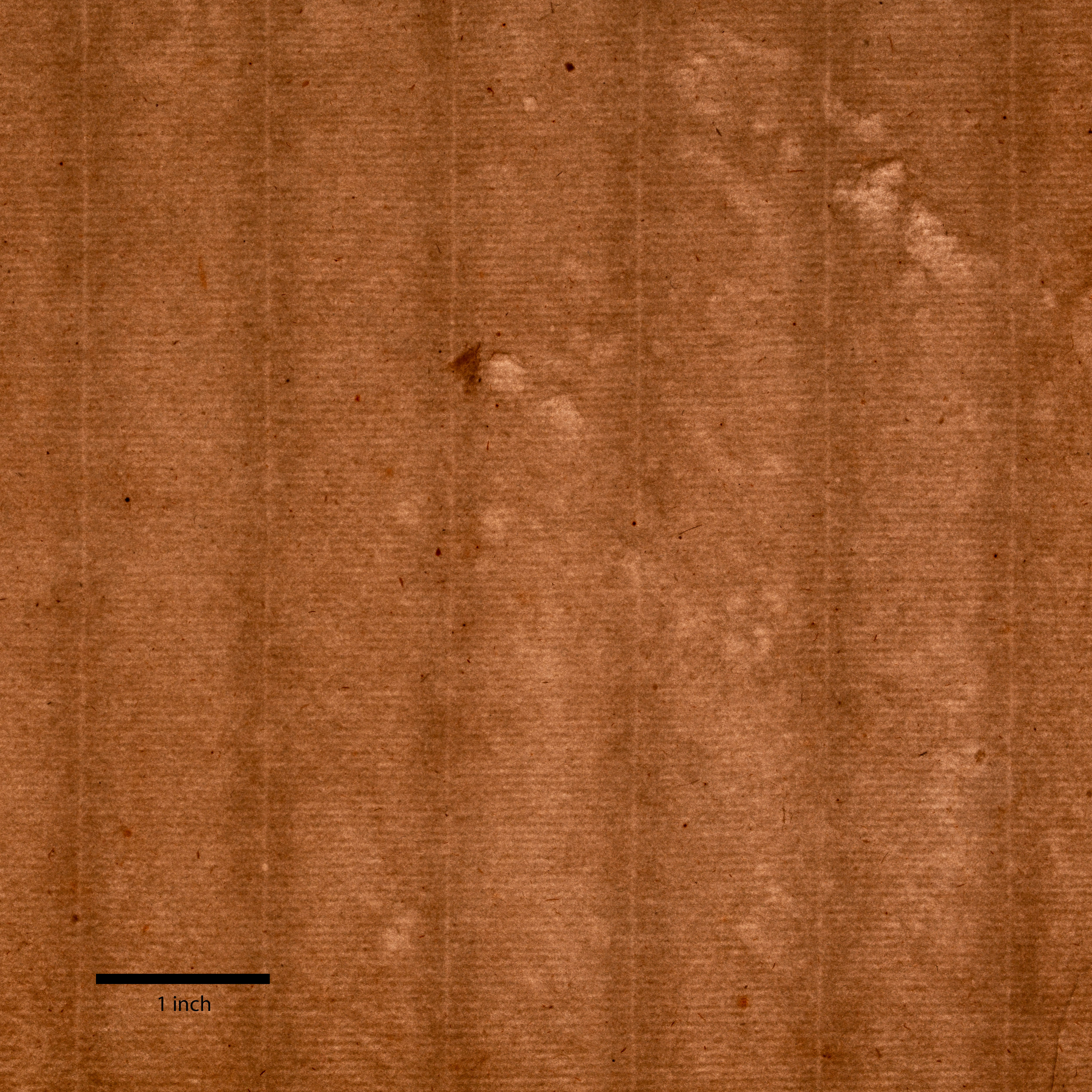 A brown sheet of paper is structured with a regular grid. Toward its right edge multiple lighter spots form an irregular pattern. A thick black line marks one inch at bottom left.