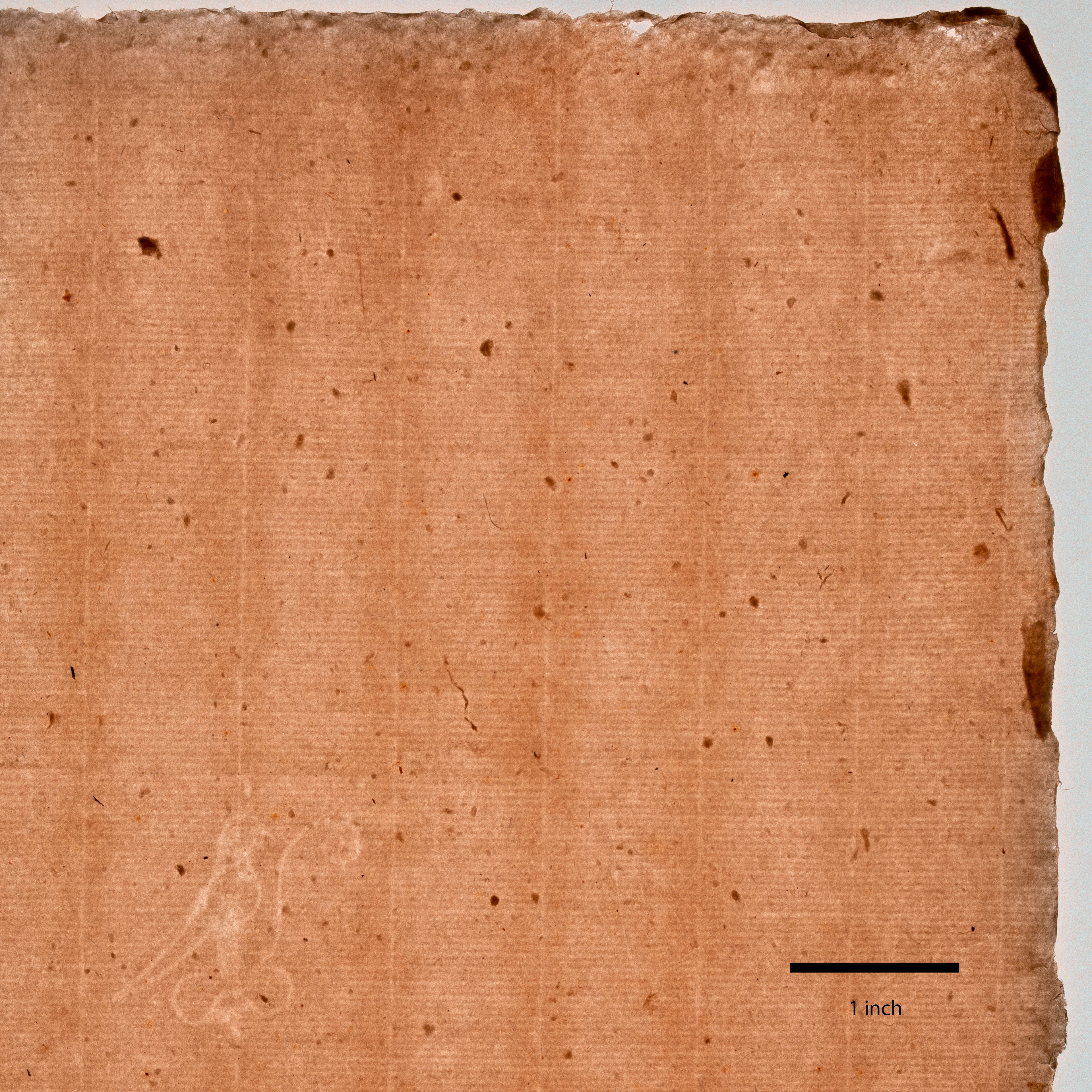 A light brown sheet with a regular grid pattern shows a more irregular edge, with areas of various thickness and multiple inclusions. A bird watermark is at lower left, and a thick black line marks one inch at bottom right.
