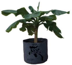 "#1 Root Pot, 6"" Wide x 7.5"" Tall"