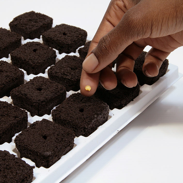 Seeds Root Riot Root Riot 25 Cube Tray