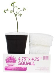 "Sure to Grow Squall 4.75x4.75"" - Case of 72"