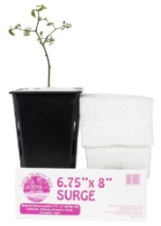 "Sure to Grow Surge 6.75x8"" - Case of 72"