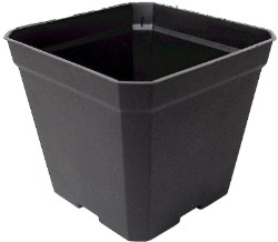Injection Molded Square 3.5 inch Pot pack of 50