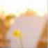 Susan's wechat avatar