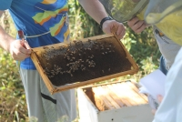 Saving The Honeybees: A sustainable craft