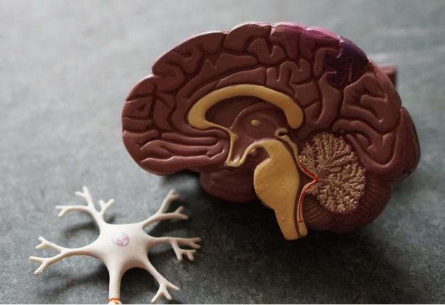 Brain Unsplash