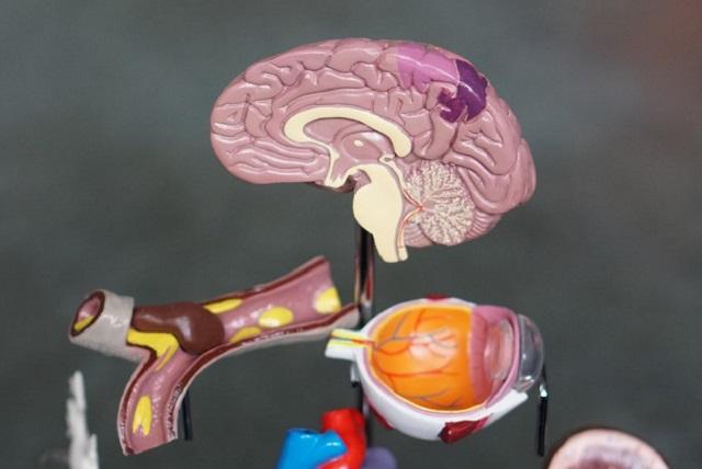 Unsplash brain