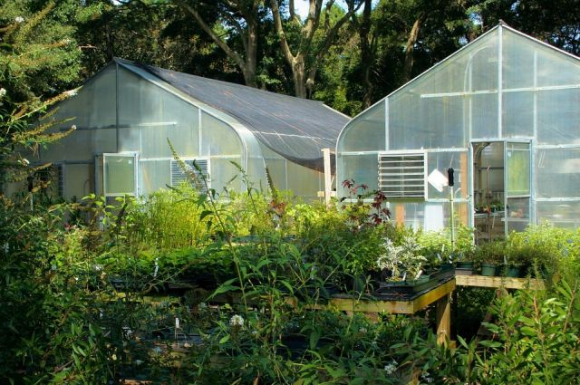 greenhouse-plants agriculture-indoors 60830_960_720