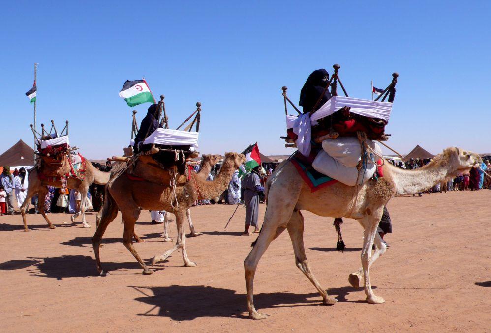Sahrawi people / Western Sahara – Exhibicion de camellos Uploaded by ecemaml Exhibicion_de_camellos_en_la_wilaya_de_Dajla_(campamentos_de_refugiados_saharauis_de_Tinduf,_abril_de_2007)