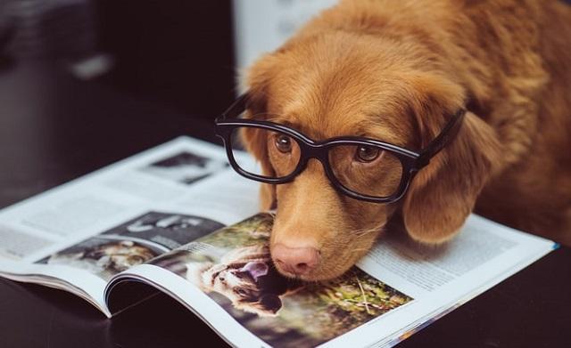 Dog Reading (Unsplash)